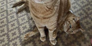 猫さんに定期的に座られて虚無顔になっている猫さんが愛おしい「諦めきったお顔」「この世には2種類の猫がいる」 - Togetter