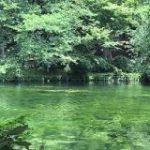 最近の井の頭公園の池…『モネ』感が強いなと思ったら3回のかいぼりの効果で絶滅危惧種の水草「イノカシラフラスコモ」が約60年ぶりに大復活していた – Togetter