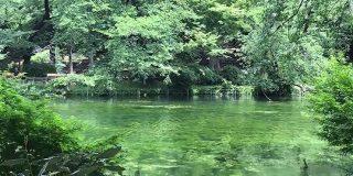 最近の井の頭公園の池…『モネ』感が強いなと思ったら3回のかいぼりの効果で絶滅危惧種の水草「イノカシラフラスコモ」が約60年ぶりに大復活していた - Togetter