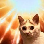 進撃の巨人見てるときに乱入してきた猫、偶然めっちゃいい感じになってムカつく「巨人より強い」「ネコと和解せよ」 – Togetter