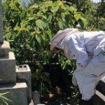 お墓に蜂が発生しSNS発信したら「それニホンミツバチじゃね?」→養蜂家登場「蜂ごと移します。私に任せなさい。」の流れに – Togetter