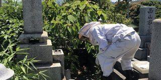 お墓に蜂が発生しSNS発信したら「それニホンミツバチじゃね?」→養蜂家登場「蜂ごと移します。私に任せなさい。」の流れに - Togetter
