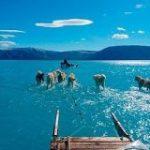 そり犬の足元は一面の水、グリーンランドの光景が波紋を呼ぶ|CNN