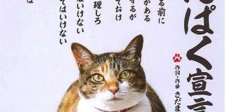 「お前を飼い主にする前に言っておきたいことがある」猫の飼い方を教える「にゃんぱく宣言」が、本家さだまさしさん作詞・作曲で説得力ある - Togetter