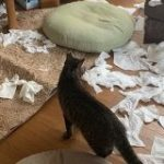 朝起きたら部屋中に猫さんのパーティーの痕跡まみれ!犯人特定は困難「左上の子が一番疲れてる」 – Togetter