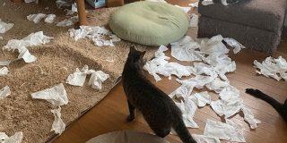朝起きたら部屋中に猫さんのパーティーの痕跡まみれ!犯人特定は困難「左上の子が一番疲れてる」 - Togetter