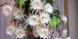 お母さんが育てた月下美人が18輪同時開花で一同仰天「スゴ過ぎて震える」「綺麗だし食べられるし」 - Togetter