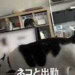 保護猫が社員とともに出勤する「猫手当」なる制度を取り入れている会社がある「素敵すぎる会社」「転職したい」 – Togetter