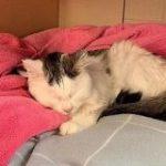 猫がソルトランプをなめて重体 獣医師が危険性を警告 – ねとらぼ