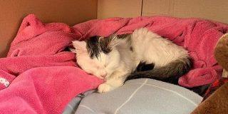 猫がソルトランプをなめて重体 獣医師が危険性を警告 - ねとらぼ