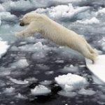 北極圏で最高気温記録 – Sputnik