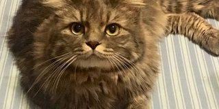 冷房つきの快適なおうちで過ごした猫さん、夏なのにフサフサの冬毛になられる「ウチもなんかそんな気がします」 - Togetter
