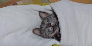 ヘビ型の猫ベッドに入って幸せそうに眠る猫さんがかわいい→同じものを貢いだ方の報告も「未消化で出てきてる」 - Togetter
