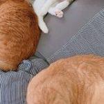 無印の人をダメにするソファを買って半年経つけどいつも混雑してて座れない「猫をダメにするソファ」 – Togetter