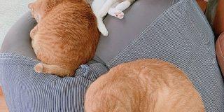無印の人をダメにするソファを買って半年経つけどいつも混雑してて座れない「猫をダメにするソファ」 - Togetter