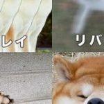 「これは最高の教材」DTMのエフェクトを秋田犬で解説した図がかわいくて分かりやすい – Togetter