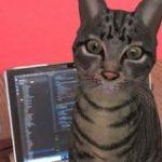 Googleで『ネコ』と検索するとAR猫さんを召喚できる!ほかの動物も確認されてとても楽しい「トラ飼育NGの我が家でも放し飼いできます!」 – Togetter