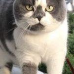 「うちの猫の体型なんか違くない?」太ってるわけじゃないのに『もっしり』としている猫さんが愛らしい – Togetter