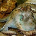なぜタコは「無脊椎動物界のスーパースター」と呼ばれるのか? – GIGAZINE