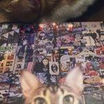 #猫がかわいいジャケ展 – Togetter