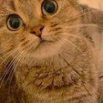 毛布をかけて足を広げて待つと猫さんが座ってくれる季節がきた!「猫でお布団が温くなって幸せですぐ寝ちゃう」 – Togetter