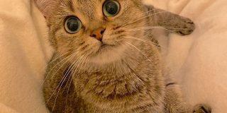 毛布をかけて足を広げて待つと猫さんが座ってくれる季節がきた!「猫でお布団が温くなって幸せですぐ寝ちゃう」 - Togetter