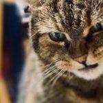 匂いで「ちゅ~る」だと思ってダッシュで来たのに、つけ麺だったと分かった時の猫の顔 – Togetter
