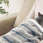 猫さんもワンちゃんもうさぎさんも、ニトリの「ペットが入れるひざ掛け」に入って人間の膝で寝てください!「可愛すぎないか?」「ペットいないけど欲しい!」 – Togetter