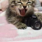 Canonのガチャのカメラを猫さんに持たせたお写真が最高すぎて可愛いが止まらないTL「なんたる破壊力」 – Togetter