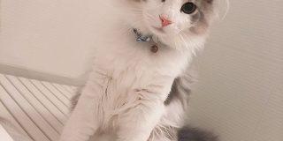 冬毛になられた長毛の猫さんがもっふもふもふもふになられて尊い美しさを発揮「こんなに違うのですか!」 - Togetter