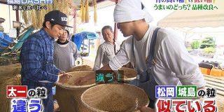 DASH村19度目の稲刈り!TOKIOが品種改良中の稲から松岡のプロデュースした新種の米がまさかの高評価 #鉄腕DASH - Togetter