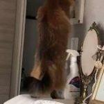 『うちの猫がインターホンの警戒設定にハマってて困る』熱心に自宅を警備する賢い猫さん「今時の子はそんなこともできるんですね」 – Togetter