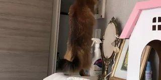 『うちの猫がインターホンの警戒設定にハマってて困る』熱心に自宅を警備する賢い猫さん「今時の子はそんなこともできるんですね」 - Togetter