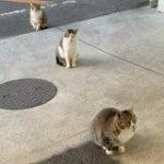 なんという偶然…!「ネコがコマ撮りみたいになってる」姿が発見される「絶妙な距離感」「進化論かな?」 – Togetter