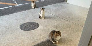 なんという偶然…!「ネコがコマ撮りみたいになってる」姿が発見される「絶妙な距離感」「進化論かな?」 - Togetter