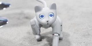 プログラマブルな猫ロボ「Meet MarsCat」は飼い主と一緒に成長・進化する | TechCrunch