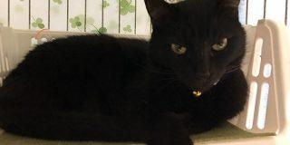 ありのままの姿を映したいのに…「黒猫の写真がジト目になってしまう理由」のわかりみが深い「ほんとはおめめパッチリなんだよ~!」 - Togetter