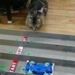 こちらのミニ四駆のサーキット、最大の難所は『猫』夢中で追いかけて楽しまれる「めっちゃ(猫が)楽しそうですね!」 – Togetter
