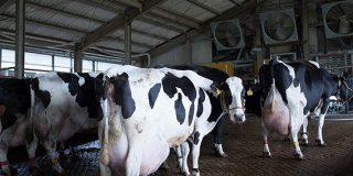 給食向け牛乳の供給先に困る酪農家を緊急支援 Oisixが「牛乳支援コーナー」を開設 ECzine