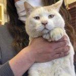 「みんな元気出して!ねこ長いよ!」長い猫は健康に良いという新説に支持が集まる – Togetter