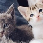 猫が部屋でくつろぐ映像をひたすら流し続けるストリーミングをノルウェー国営放送が開始 – GIGAZINE