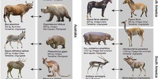 絶滅種の「代役」を立てれば生態系が回復すると判明!麻薬王のカバがきっかけ   ナゾロジー