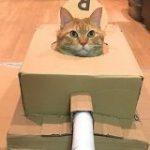 夫が急にダンボールで何か作り始めたと思ったら「でた~っネコ戦車~~!!」「殺傷能力が高すぎる」→ついに日本でも猫戦車が流行の兆し!? – Togetter