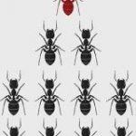 コンピュータすら能力を向上させる「アリの集合知」がすごい | ナゾロジー