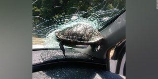 飛んできたカメ、走行車のフロントガラスに突き刺さる 米高速道路|CNN