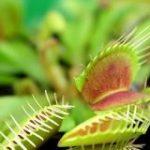 食虫植物を誕生させた「3つの進化ステップ」とは? | ナゾロジー