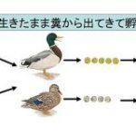 魚卵は鳥に食べられても生きたまま糞から出てくると判明!魚は糞によって別の湖に移動していた | ナゾロジー