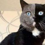 顔が2色に割れた猫の子ども、「受け継がれ方が見事」と話題に | ナゾロジー