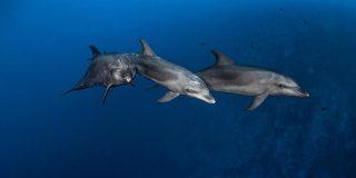 イルカが道具を使う狩り、同世代から学ぶ、初確認 | ナショナルジオグラフィック
