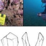 【初発見】ついにアボリジニの遺跡が海底で見つかる!温暖化による海面上昇で水没していた | ナゾロジー